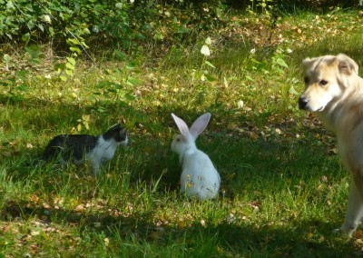 kot, królik , pies