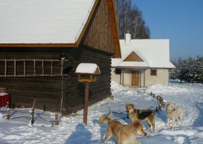 psy zimą
