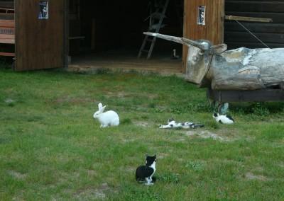 zwierzaki przed stodołą